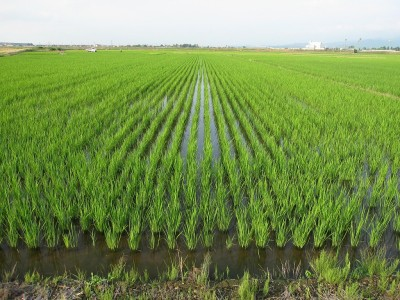 新潟もりばやし農園は「土作り」からこだわっています。