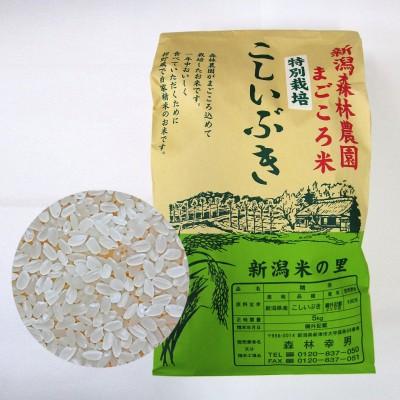【毎回10%増量】特別栽培米こしいぶき(白米)5kg 定期6回コース