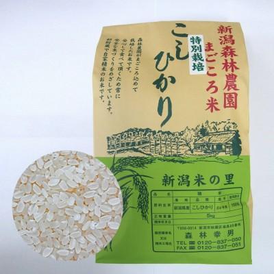 特別栽培米コシヒカリ(白米)5kg