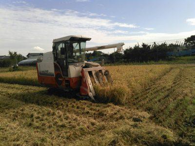 新米!稲刈り時期になりました!